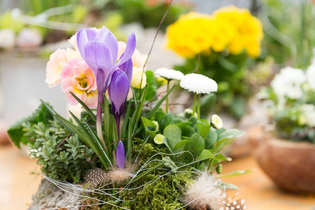 Blumenschmuck für den Frühling und Ostern für den Garten und die Terrasse