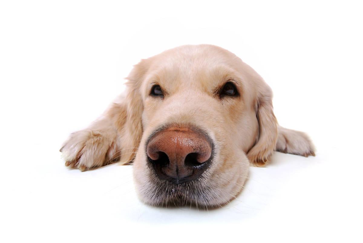 Hundeernährung - von BARF bis Trockenfutter