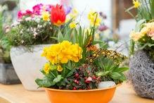 Kurs: Blumenschmuck für den Frühling und Ostern für den Garten und die Terrasse - mit  Floristmeisterin Iris Paap