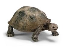 Schleich Wild Life 14601 Riesenschildkröte