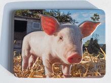 geprägter Metallmagnet - Schweinchen