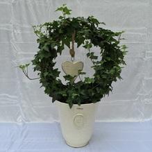 Blumen & Besonderes:Topf mit Efeubogen