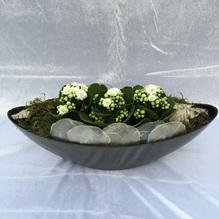 Blumen & Besonderes:Topf Schiff Minipflanzen