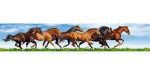 Panoramapostkarte Pferde