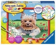 Ravensburger 283255 Malen nach Zahlen: Kleiner Yorkshire Terrier