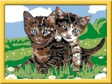 Ravensburger 278367 Malen nach Zahlen: Verspielte Kätzchen