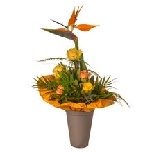 Blumenstrauß - Frischekick
