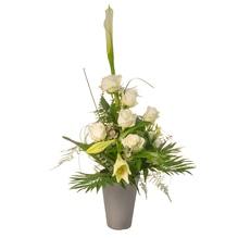 Blumenstrauß - White Elegance