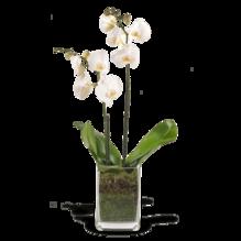 Orchideenarrangement