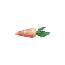 Karotte aus Watte, 40 mm, SB-Btl. 4 Stück