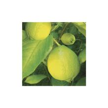 Avantgarde Cocktail-Servietten, 25x25 cm, Packung 20 Stück, Zitrone