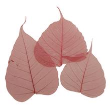 Willowblatt, skelettiert, SB-Btl. 8 Stück, 6 - 10 cm, rot