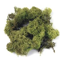Islandmoos, SB-Btl. 100 g, h.grün