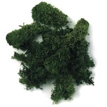 Islandmoos, SB-Btl. 100 g, d.grün