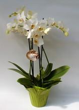 Phalaenopsis / Orchidee vier Rispen