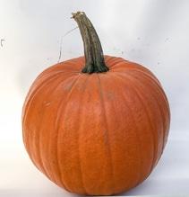 Halloween Kürbis , Schnitzkürbis 35 - 40 cm