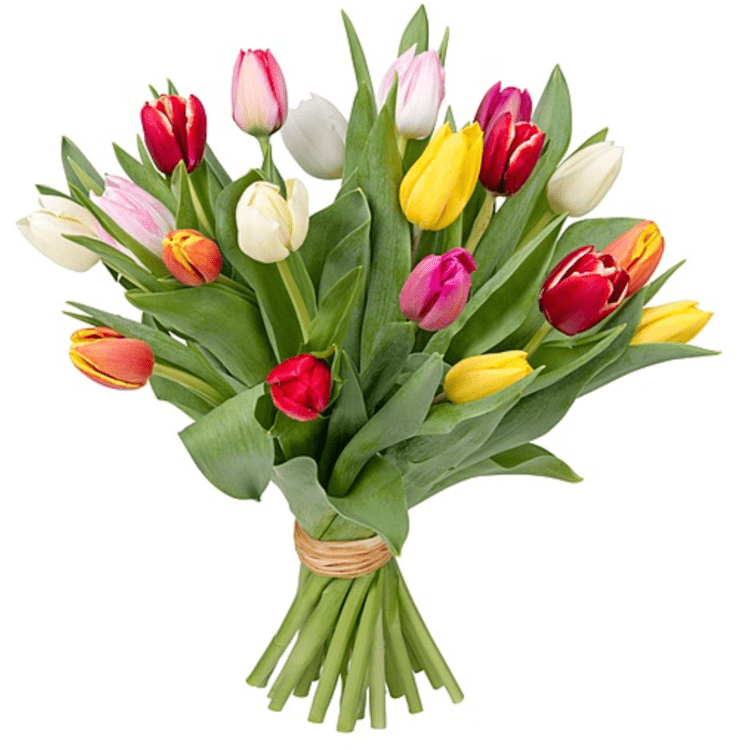 Bund Tulpen (10 Stück)